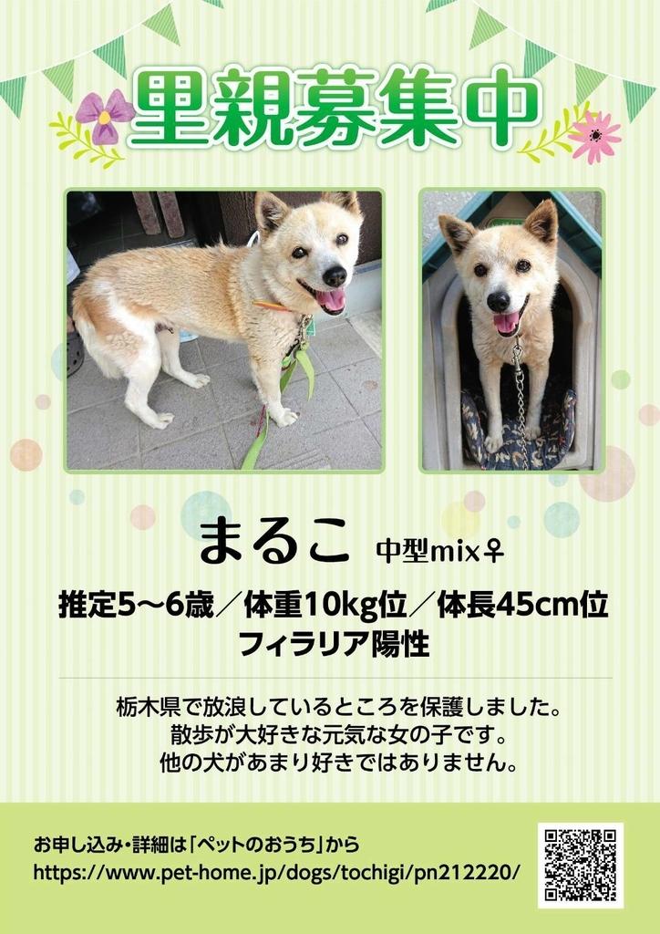 f:id:ancoro_chan:20181007185752j:plain
