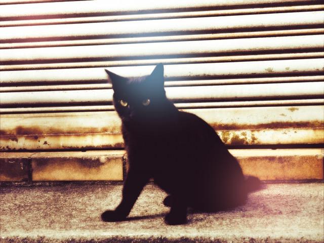 三崎のレトロな猫