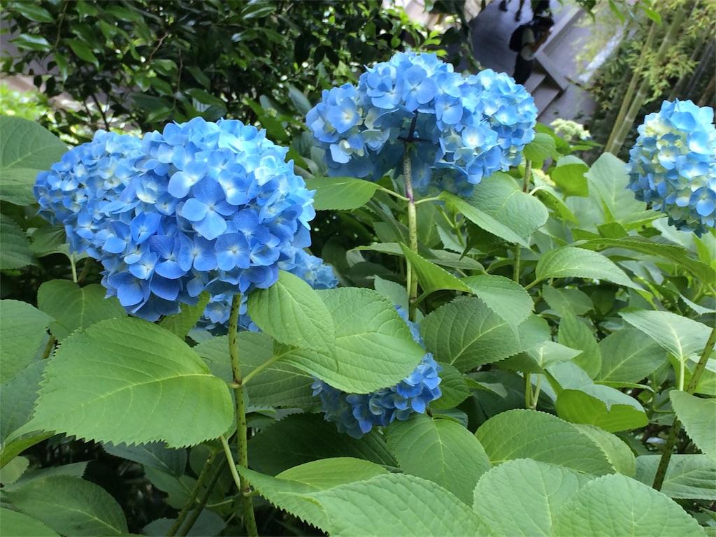 f:id:andusagi:20170614013749j:image