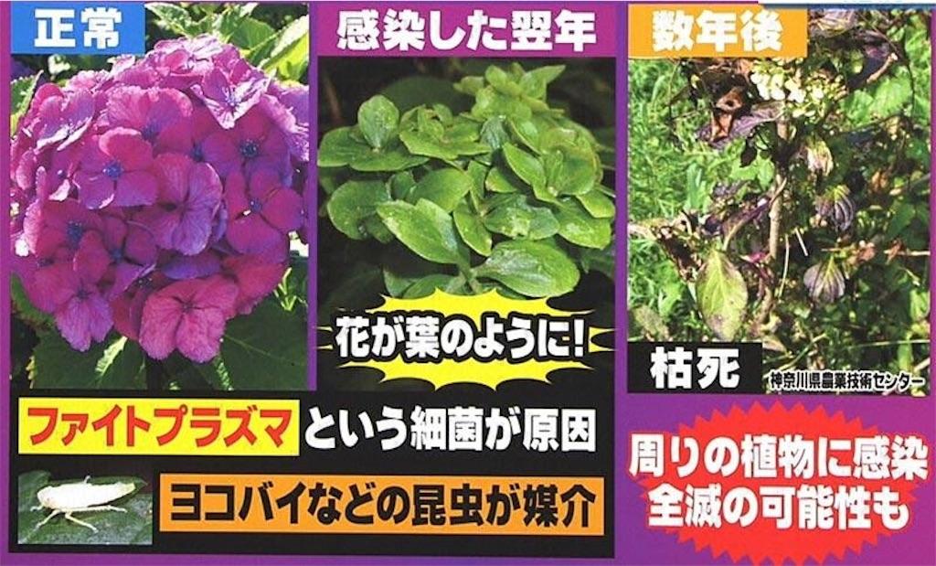 f:id:andusagi:20170614020229j:image