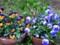 パークシテイ構内の花壇