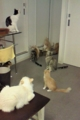 [misc] 猫カフェにて スタッフさんを出待ち
