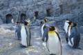 [travel] 旭山動物園・ペンギン