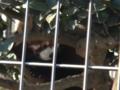 [misc] 市川動植物園での娘娘