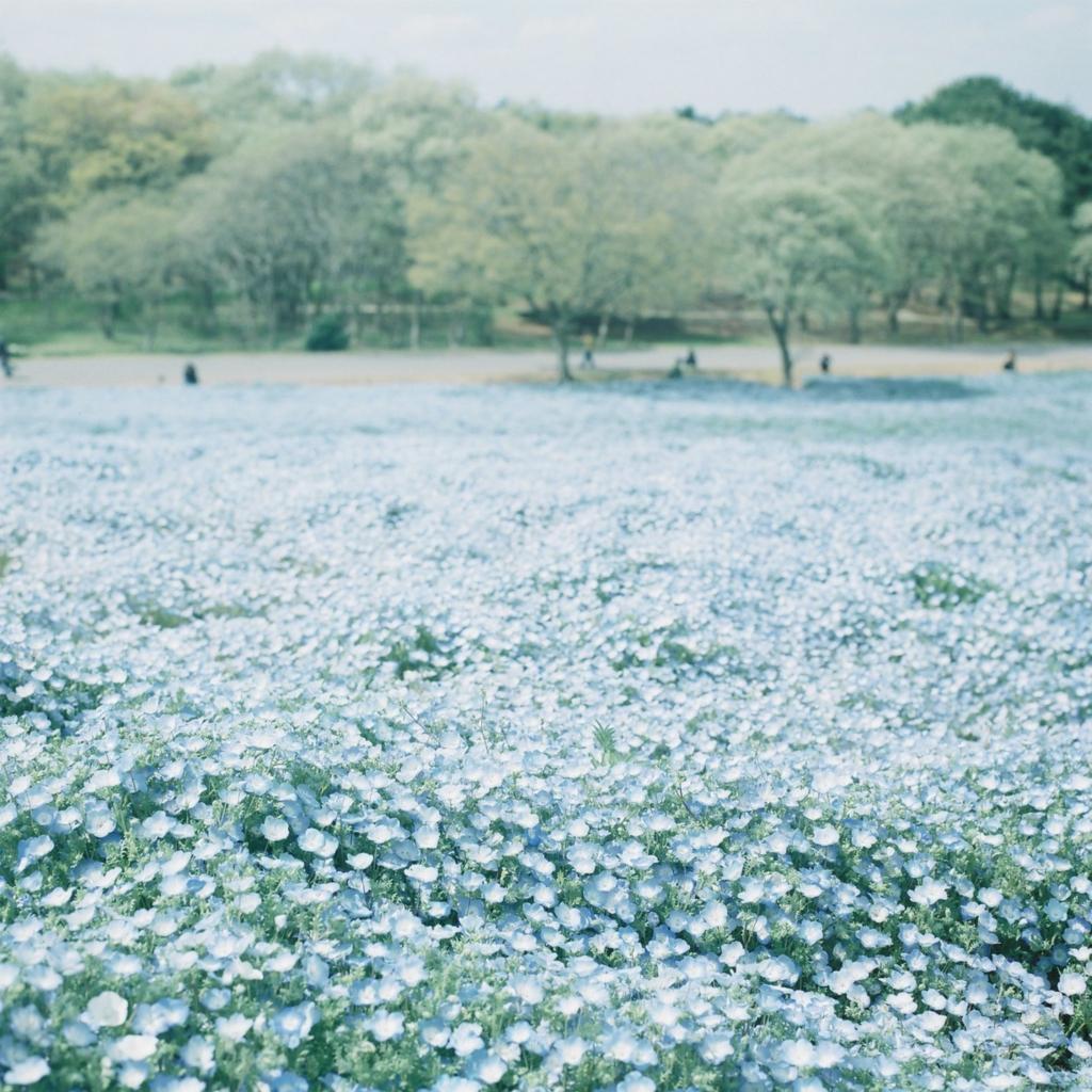 f:id:anemone-kaori:20170430221104j:plain