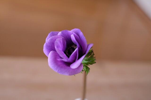 f:id:anemone-kaori:20190217153257j:image