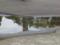 駒沢公園にて雀の水浴び