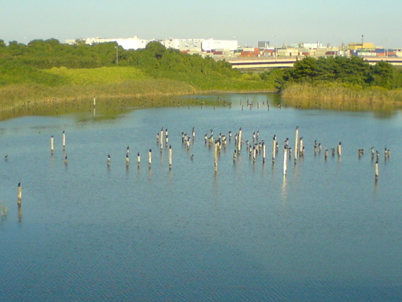 東京都立東京港野鳥公園
