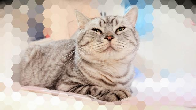 f:id:angeltherapycat:20191016194526j:image