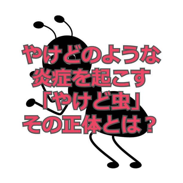 f:id:aniki-ken:20200901160933j:plain