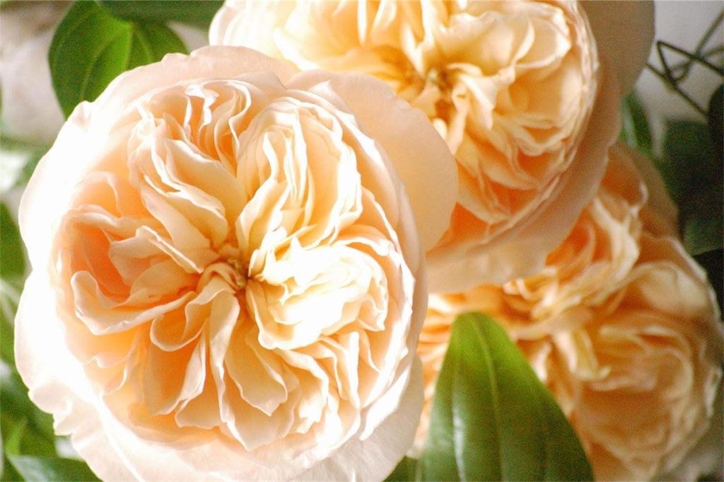 f:id:anima-florist:20161024133254j:image