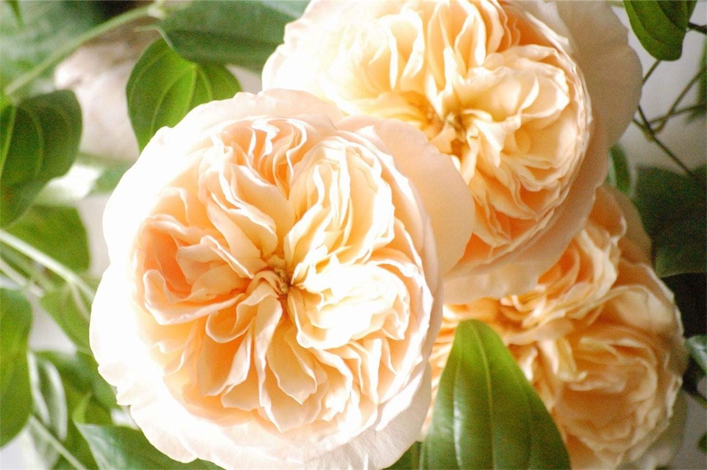 f:id:anima-florist:20161024133303j:image