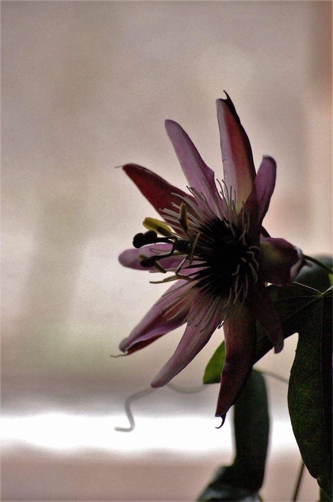 f:id:anima-florist:20161101103112j:image