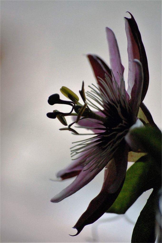 f:id:anima-florist:20161101103121j:image