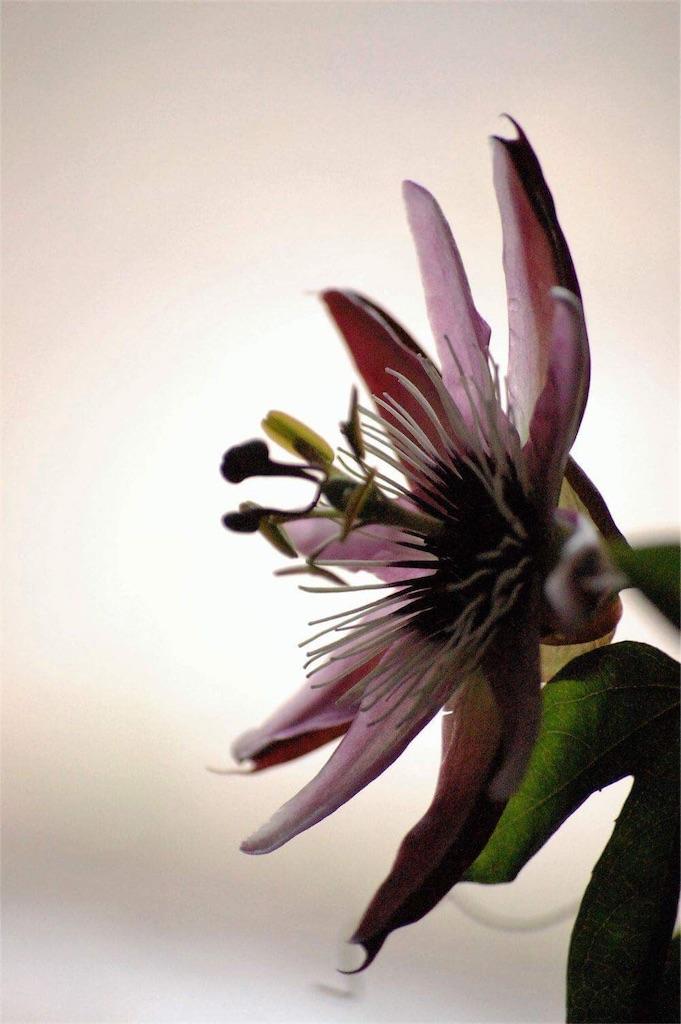 f:id:anima-florist:20161101103128j:image