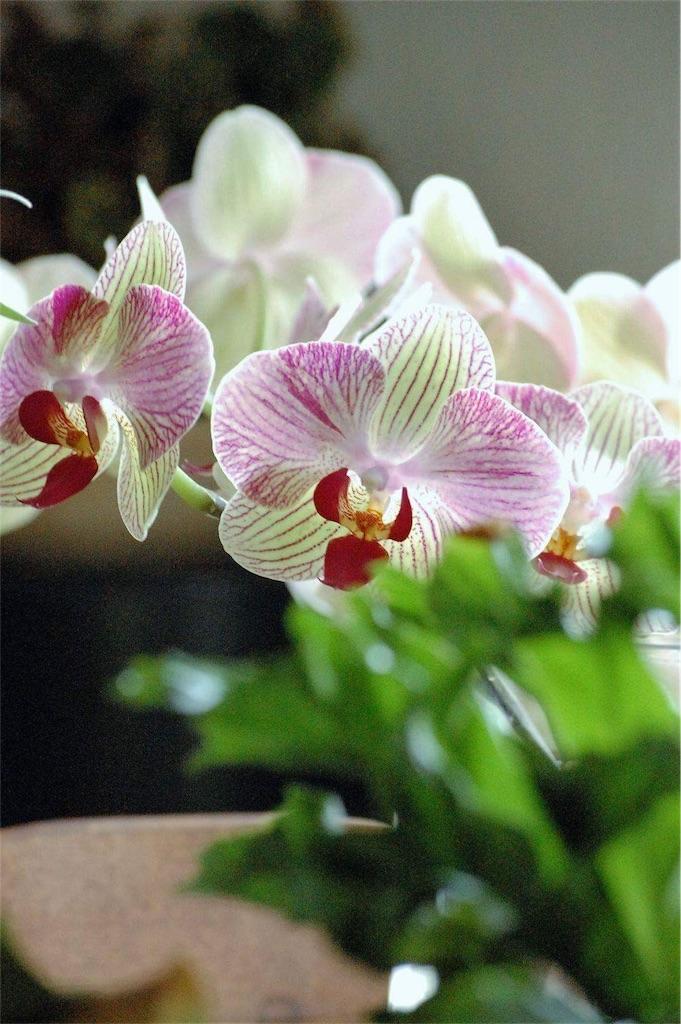 f:id:anima-florist:20161102083536j:image
