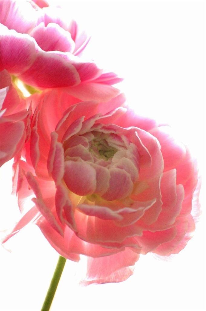 f:id:anima-florist:20161211142837j:image