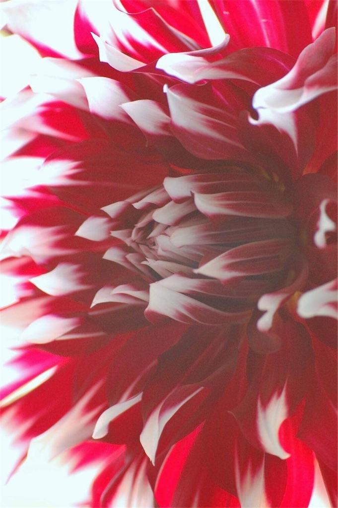 f:id:anima-florist:20161213115924j:image