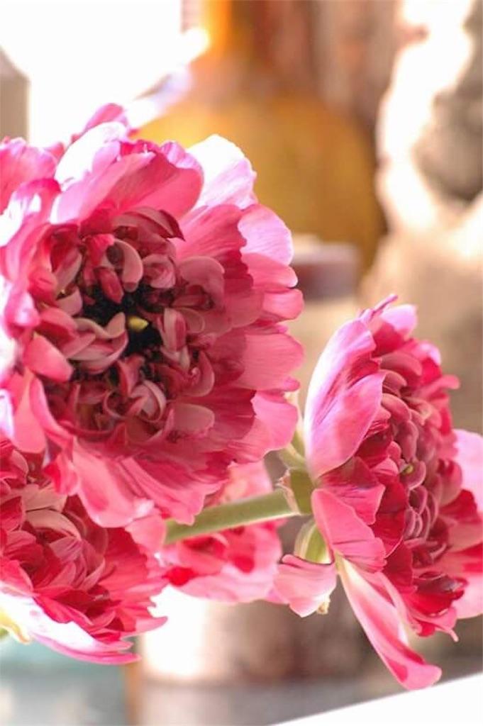 f:id:anima-florist:20161224215336j:image