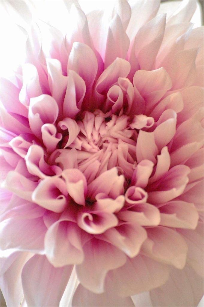 f:id:anima-florist:20170531090556j:image