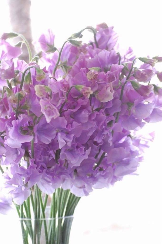 f:id:anima-florist:20180131164844j:image