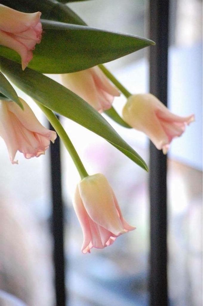 f:id:anima-florist:20180210132421j:image