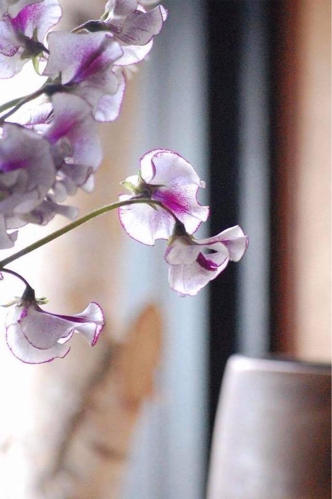 f:id:anima-florist:20180214170332j:image