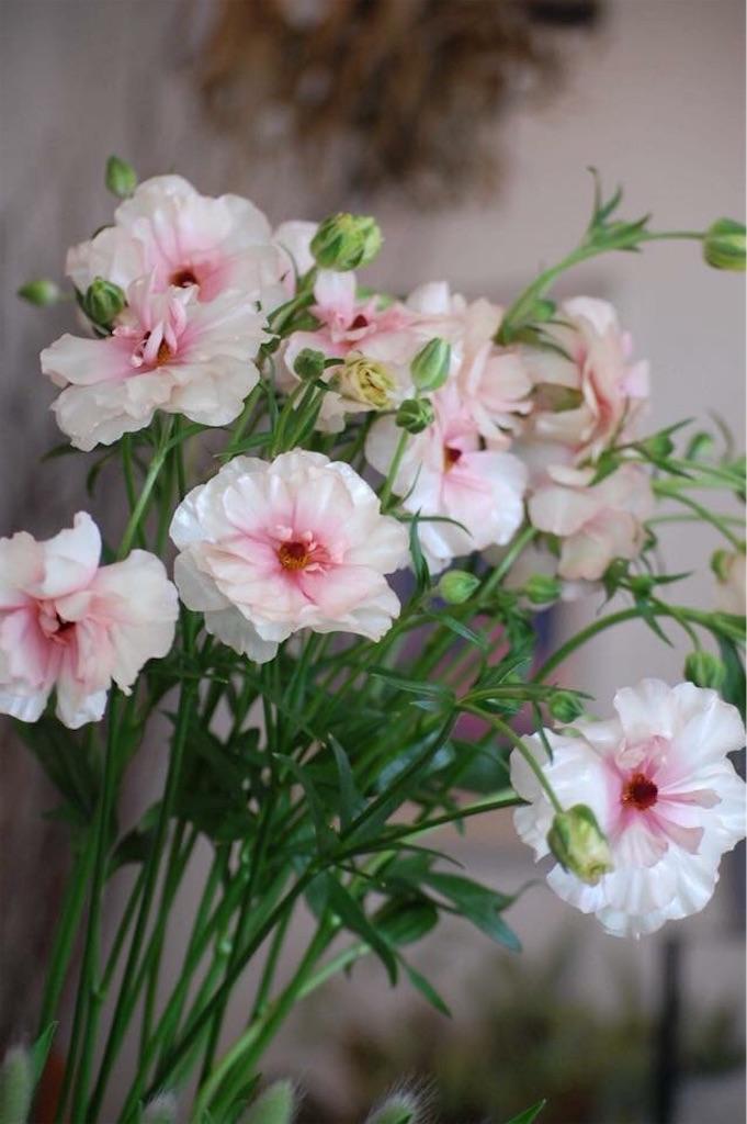 f:id:anima-florist:20180216170500j:image