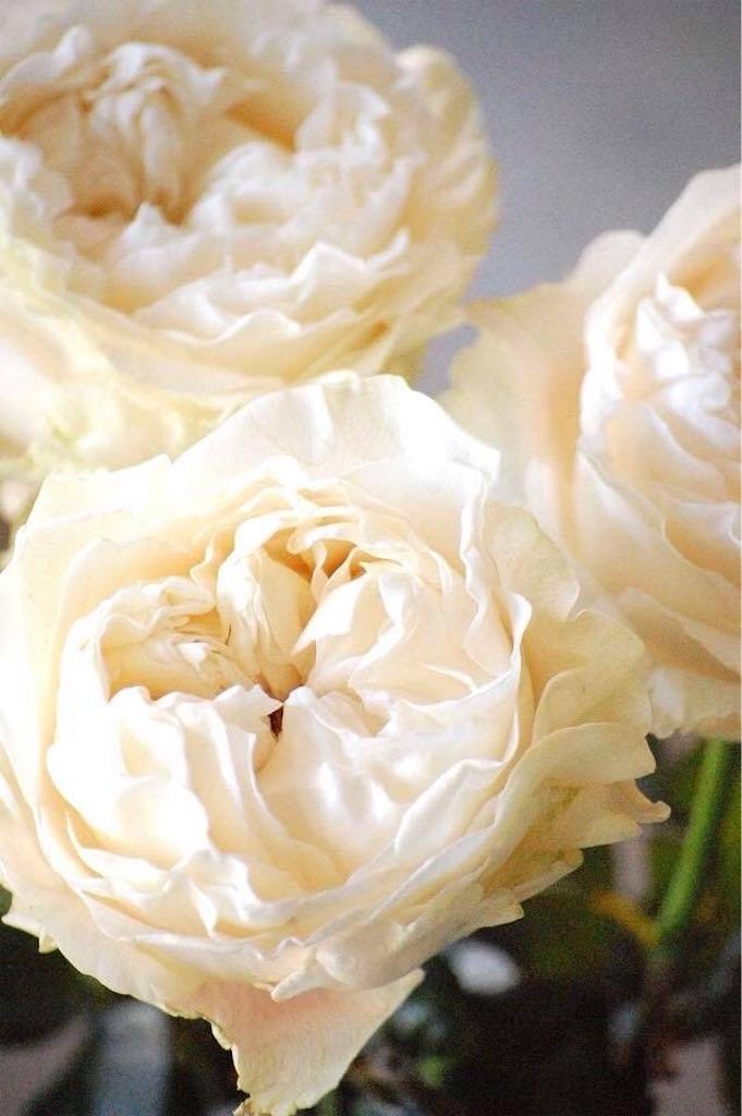 f:id:anima-florist:20180220155652j:image