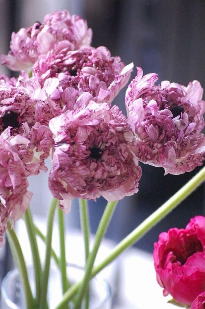 f:id:anima-florist:20180223123505j:image