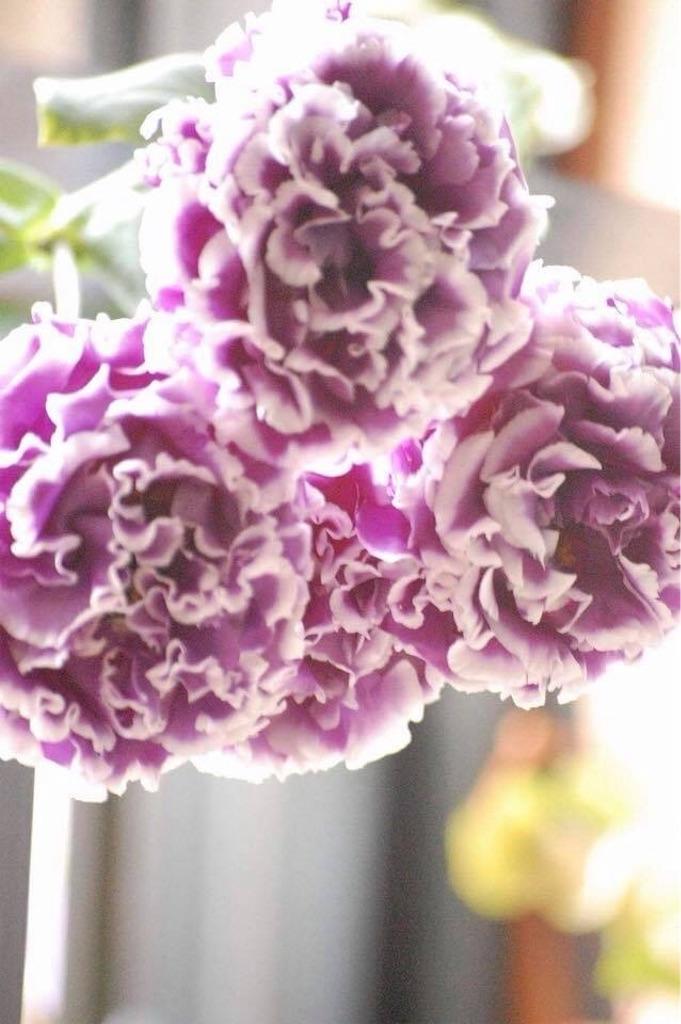 f:id:anima-florist:20180420072455j:image