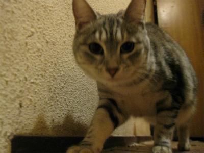 f:id:animal_protections:20111231114208j:image