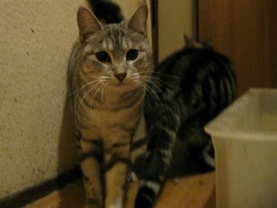 f:id:animal_protections:20111231114209j:image