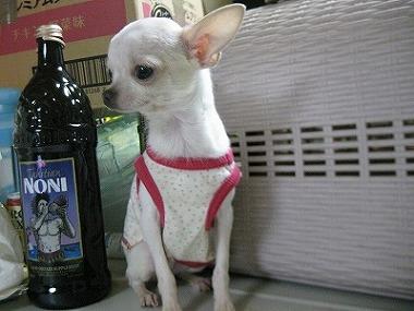 f:id:animal_protections:20120118123444j:image