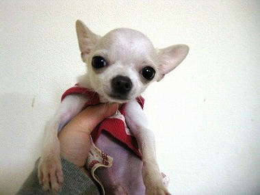 f:id:animal_protections:20120118123446j:image