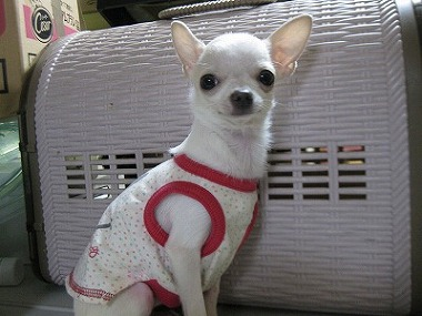 f:id:animal_protections:20120118123447j:image