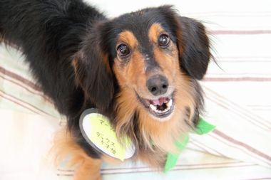 f:id:animal_protections:20120205212457j:image