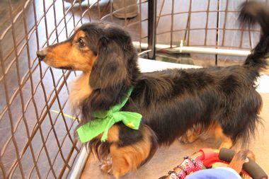 f:id:animal_protections:20120205212459j:image
