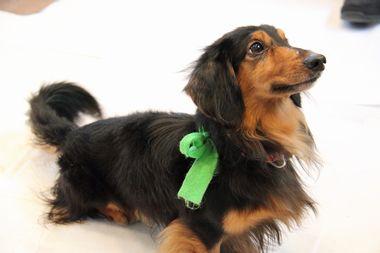 f:id:animal_protections:20120205212500j:image