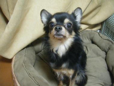 f:id:animal_protections:20120218162340j:image