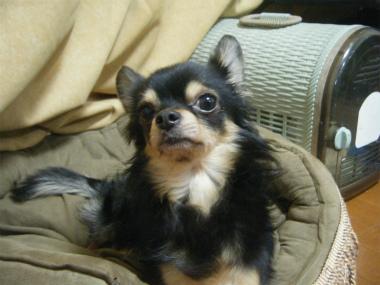 f:id:animal_protections:20120218162341j:image