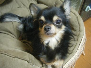 f:id:animal_protections:20120218162342j:image