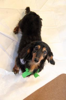f:id:animal_protections:20120226194627j:image