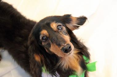 f:id:animal_protections:20120226194628j:image