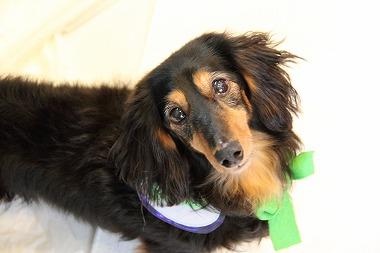 f:id:animal_protections:20120226194629j:image