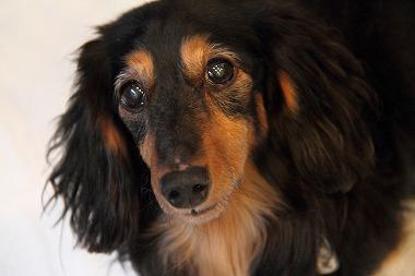 f:id:animal_protections:20120226194630j:image