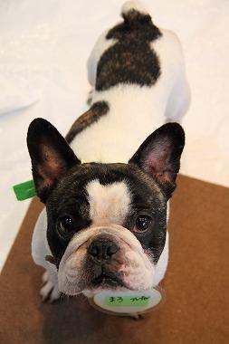 f:id:animal_protections:20120227222540j:image