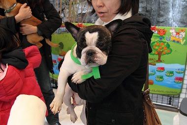 f:id:animal_protections:20120227222542j:image