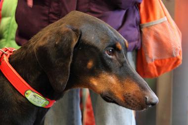 f:id:animal_protections:20120304225956j:image