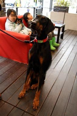 f:id:animal_protections:20120304225959j:image